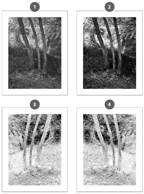 Cyanotype_negatives-1