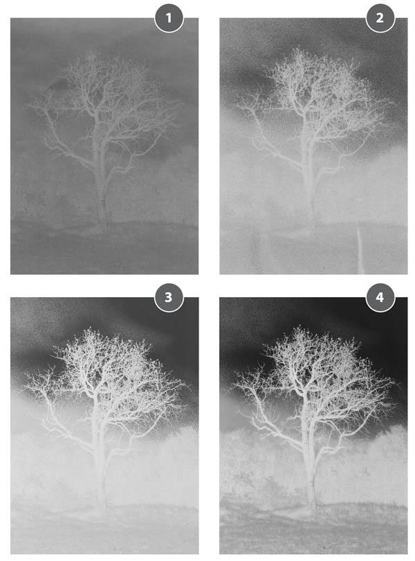 Cyanotype_negatives